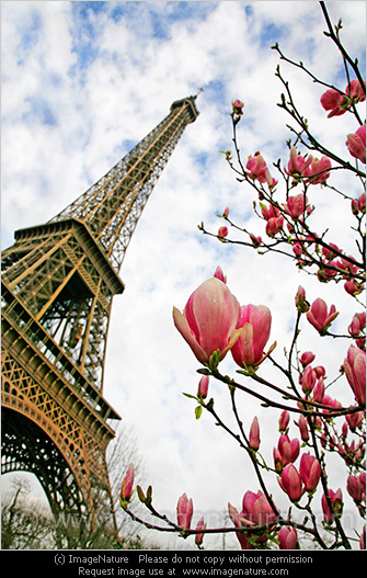 eiffel tower with pink magnolia flowers spring in paris. Black Bedroom Furniture Sets. Home Design Ideas