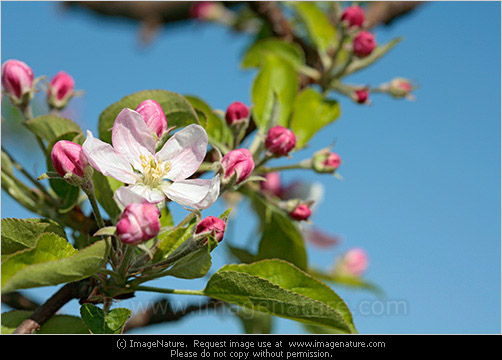 Photo Images with blue sky spring photo