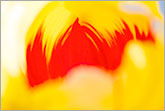 Splash of bright yellow and red colors abstract image