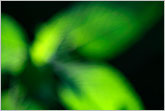 Green plant nature abstract image